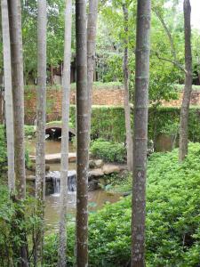 037 Ritz Phulay Bay trees
