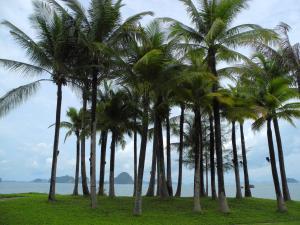 044 Palms looking toward Phuket